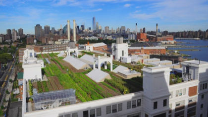 green roofs 10pkg transfer frame 540 Green Roof Initiative Shows Unintended Consequences