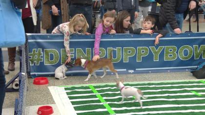 puppy bowl 2 So Cute! Puppy Bowl Draws Smiles At DIA