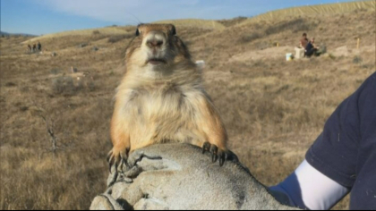 loveland prairie dogs 5pkg frame 861 Developer Finds Compromise That Includes Homes, Prairie Dogs