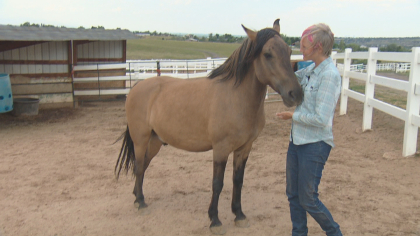 zumas rescue 7 Rescue Ranch Saves Horses, Horses Save People