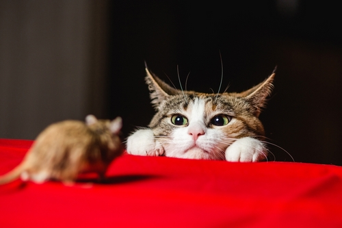 The Cat-and-Mouse Game of Crypto Regulation Enters a New Phase